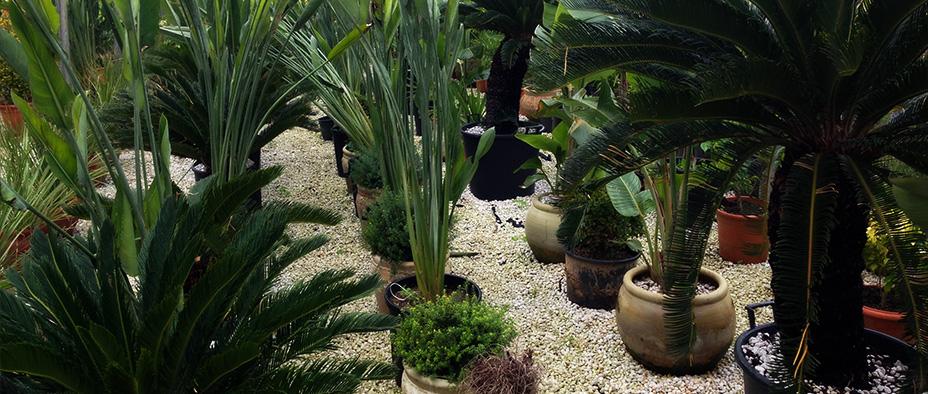 tunisie garden plantes ornementales On plantes et jardins tunisie
