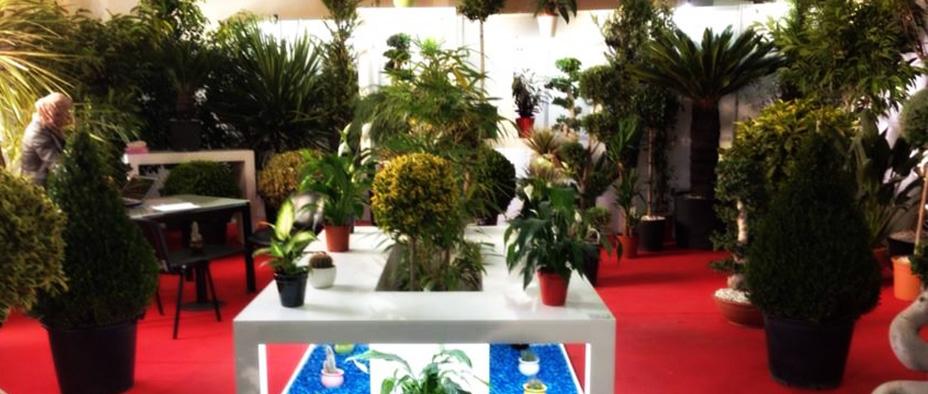 Tunisie garden accueil for Vente plantes artificielles tunisie