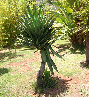 tunisie garden plantes d 39 ext rieur. Black Bedroom Furniture Sets. Home Design Ideas