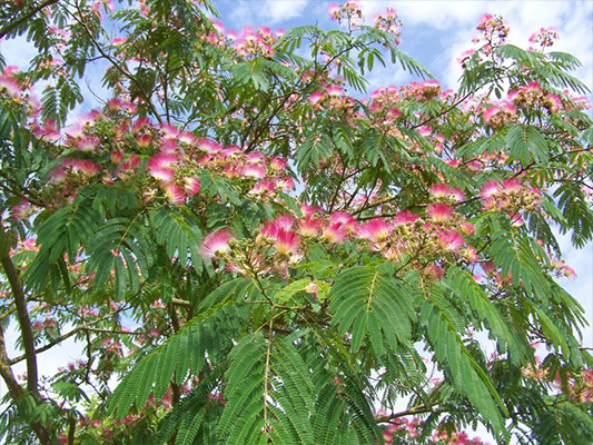 tunisie garden plantes d ext 233 rieur
